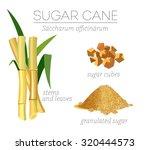 superfood sugar cane vector set.... | Shutterstock .eps vector #320444573