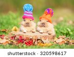 Stock photo two little funny rabbits dressed in woolen knitted hats in autumn 320598617