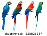Collection Of Macaw Birds  Blu...