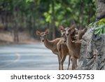 Deer Crossing The Street In Zoo