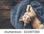 Stock photo cute little ginger kitten is resting in soft blanket on wooden floor and looking at camera 321007283