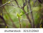 tree branch with buds.