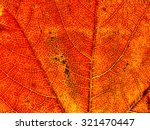 texture of a leaf in autumn | Shutterstock . vector #321470447
