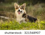 dog welsh corgi | Shutterstock . vector #321568907