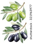 green and black olives with... | Shutterstock . vector #321963977