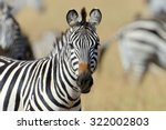zebra on grassland in africa ... | Shutterstock . vector #322002803