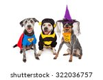 three adorable dogs wearing... | Shutterstock . vector #322036757