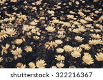 Daisy Flowers Meadow. Selectiv...
