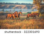 Brown Horses Running Across Th...