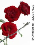 Small photo of Roses behind barbed wire symbolising constraint or restriction
