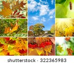 various images autumn... | Shutterstock . vector #322365983