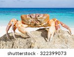 Crab On Tachai Island  Phangng...