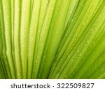 Palm Leaf With Water Drop