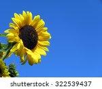 Sunflower Against A Blue Sky...