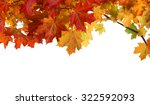 isolated autumn maple leaves on ... | Shutterstock . vector #322592093