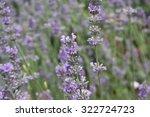 wildflowers | Shutterstock . vector #322724723
