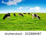 Stock photo cows on a green field 322888487