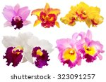 colorful orchid isolated on... | Shutterstock . vector #323091257