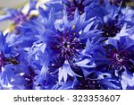 Cornflower Blue Flowers...