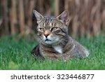 nice cat on the garden | Shutterstock . vector #323446877