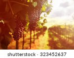 grape harvest | Shutterstock . vector #323452637