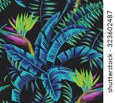 exotic tropical plants and... | Shutterstock .eps vector #323602487