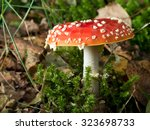 The Red And White Poisonous...