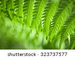 Fresh Green New Zealand Fern...