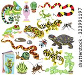 reptiles set   amphibians and... | Shutterstock .eps vector #323991197