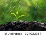 green sprouts in the rain | Shutterstock . vector #324023357