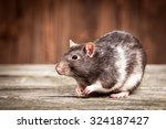 pet rats on a wooden background | Shutterstock . vector #324187427