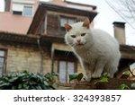 Cute Cat In Istanbul  Turkey.