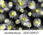 Beautiful Daisies With A Yello...