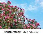 Flowering Plant Oleander On...