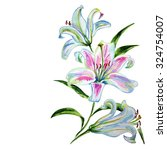 white lily  watercolor   Shutterstock . vector #324754007