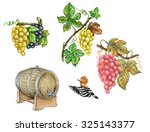 Illustration Of Grapes  Vitis...
