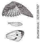 wings  vintage engraved... | Shutterstock . vector #325186787