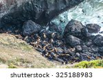 a lot of sea lion on in sea... | Shutterstock . vector #325188983