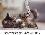Stock photo the beautiful striped domestic cat plays with a toy 325231847