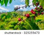 closeup of coffee fruit in... | Shutterstock . vector #325255673