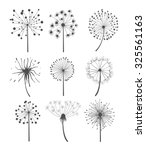 Abstract Graphic Dandelion...