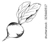 monochrome sugar beet vegetable ... | Shutterstock .eps vector #325660517