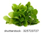 spinach vegetables isolated on... | Shutterstock . vector #325723727
