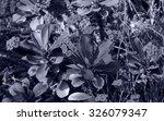 euphorbia milii   tenerife ...   Shutterstock . vector #326079347
