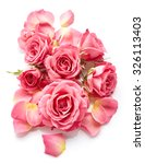 Pink Roses Isolated On White...