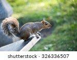 grey squirrel | Shutterstock . vector #326336507
