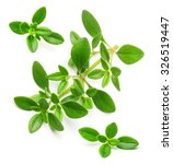 thyme fresh herb isolated on... | Shutterstock . vector #326519447