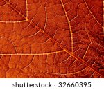 fragment of the old red leaf... | Shutterstock . vector #32660395
