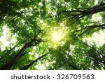 forest with sunlight. the sun... | Shutterstock . vector #326709563