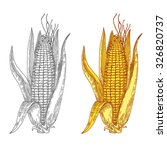 mature corn  hand drawn  vector ... | Shutterstock .eps vector #326820737